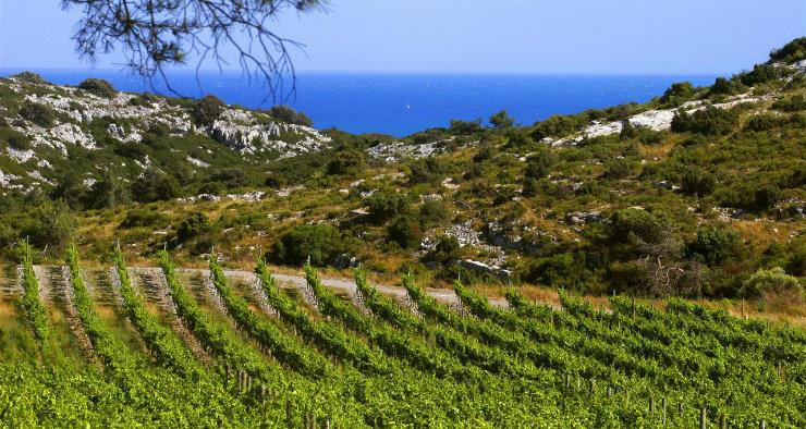 The great wines of Languedoc